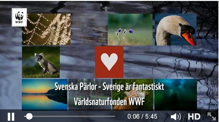 WWF-film